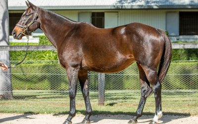 Skyerush joins broodmare band