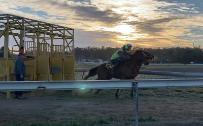Ipswich Turf Club stables for Grandview Stud