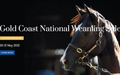 MAGIC MILLIONS 2021 NATIONAL WEANLING SALE – 20-21 MAY